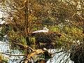 Schwanensee - panoramio.jpg