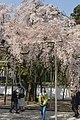 Semboin subtemple in Daigoji (3472617702).jpg