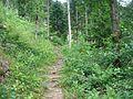 Sentier (23).jpg
