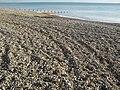 Shingle Beach and Groyne at Worthing.JPG