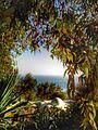 Sidi Bou Said-Nature & sea.jpg
