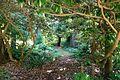 Siebold Trail - UBC Botanical Garden - Vancouver, Canada - DSC08455.jpg