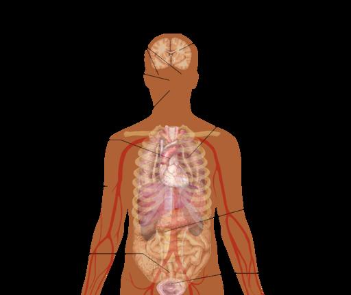 512px Signs and symptoms of anaphylaxis - Alergia Definición y conceptos