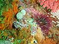 Silver tipped nudibranch at Lorry Bay PB092315.JPG