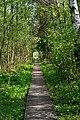 Skulyn Kovelskyi Volynska-Nechymne nature reserve-trail to the lake.jpg