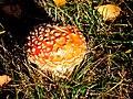 Slovakia autumn 7.JPG