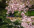 Smithsonian Gardens in April (16992433754).jpg