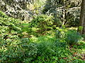 Sous-bois au jardin Albert Kahn.JPG