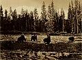 Souvenir book of Yellowstone National Park (1920) (14743380186).jpg