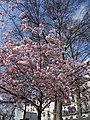 Springtime in Paris (33041270470).jpg