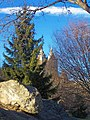 Spruce in Central Park, NYC.jpg