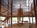 Squelettes des dinosaures au musée national du Niger.jpg