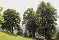 St Oswald ob Eibiswald Kirchbäume.jpg