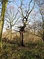 Stanley Marsh Nature Reserve - geograph.org.uk - 1232982.jpg