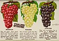 Stark fruits (1896) (20356709358).jpg