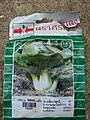 Starr 080610-8334 Brassica campestris var. chinensis.jpg