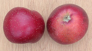 Lenticel - Lenticels on apples.