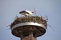 Storchennest in Auhagen IMG 5395.jpg