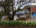 Straw bale and daffodils PCC Sylvania - Portland Oregon.jpg