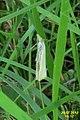 Straw grass-veneer (Hav) (7948771634).jpg