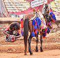 Street, Jimma, Ethiopia (14998648213).jpg