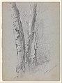 Study of Birch Trunks (Scribners') MET DP348635.jpg
