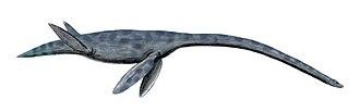 Plesiosauroidea - Styxosaurus, an elasmosaurid