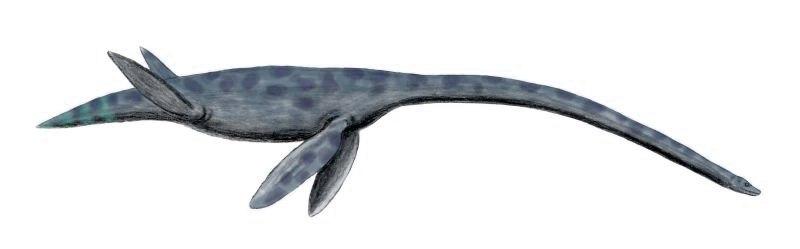 Styxosaurus BW