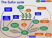 Diagramme du Cycle du sulfure