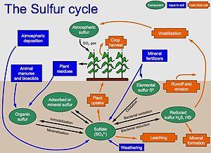 Sulfur cycle - Sulfur cycle
