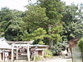 Sumiyoshi shrine sacred arch and Shrine woods.jpg