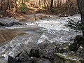 Swollen Crabtree Creek Umstead SP NC 3549 (4108618755).jpg