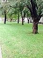 Sydney trees.jpg