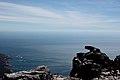Table Mountain - panoramio (9).jpg