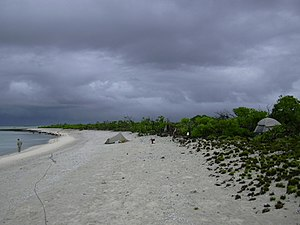 Bokak Atoll - Lagoon shoreline at Sibylla Island, with coral rubble beach and edge of Naupaka shrubland.