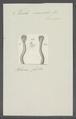 Teredo navalis - - Print - Iconographia Zoologica - Special Collections University of Amsterdam - UBAINV0274 080 02 0005.tif