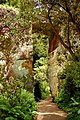 The 'Quarry Garden' at Belsay Castle (7) - geograph.org.uk - 1384685.jpg