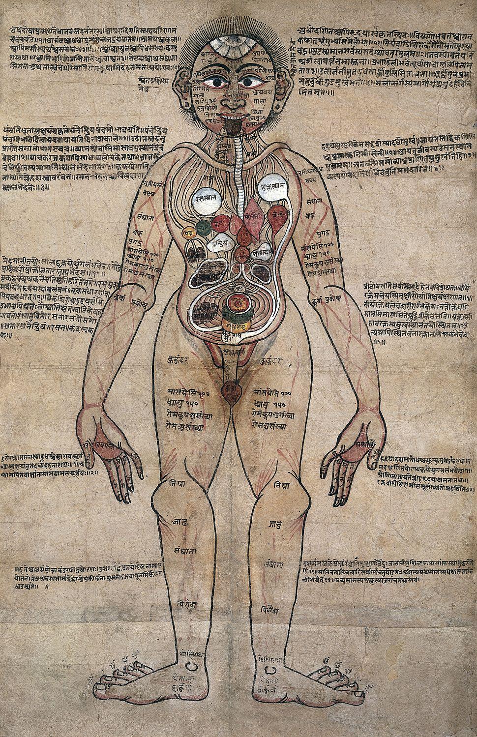 The Ayurvedic Man., c.18th century Wellcome L0017592