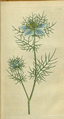 The Botanical Magazine, Plate 22 (Volume 1, 1787).png