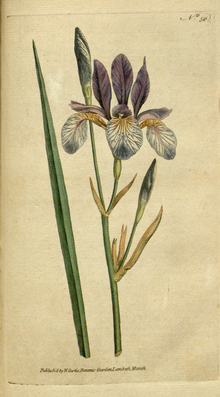 The Botanical Magazine, Plate 50 (Volume 2, 1788).png