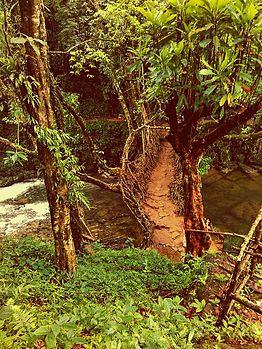 The Bridge of Living Roots.jpg