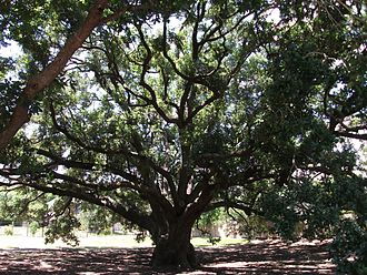 Missouri City, Texas - The city's historic Freedom Tree Park