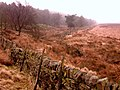 The Edge of the Wood - geograph.org.uk - 374319.jpg