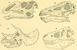 The Osteology of the Reptiles-105 dfghft.png