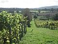 The Vineyard - geograph.org.uk - 265551.jpg