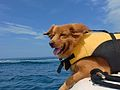 These dogs love the water.JPG