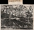Three plants, including a calabash-tree (Crescentia cujete) Wellcome V0044105.jpg