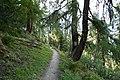 Tiejer Wald.jpg