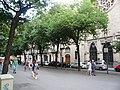 Til·lers de la Rambla Catalunya P1510483.jpg