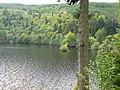 Tiny islet, Lake Vyrnwy - geograph.org.uk - 1322792.jpg